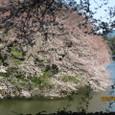21_千鳥が淵の桜③